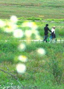牵牛花 (2012)