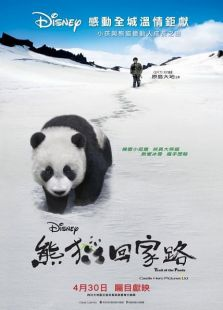 熊猫回家路(国语)