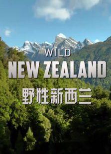 野性新西兰