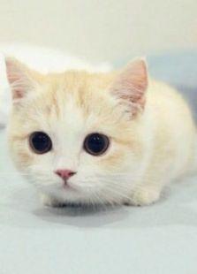 BBC:对猫的发现
