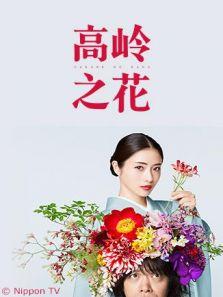 高岭之花电视剧全集