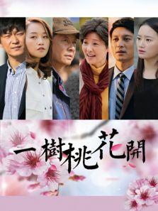 一树桃花开DVD(国产剧)