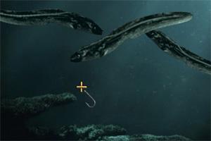 清水钓鱼龙8娱乐国际